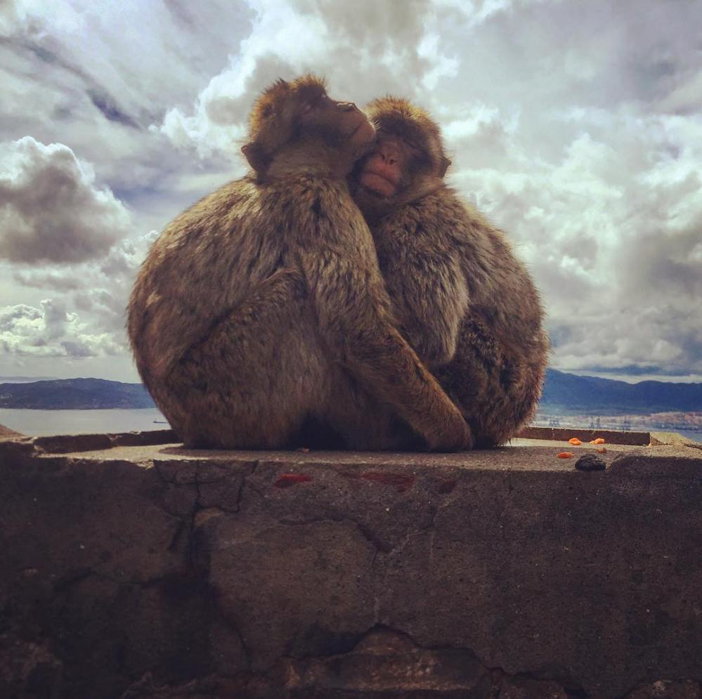 Monkeys in Gibraltar